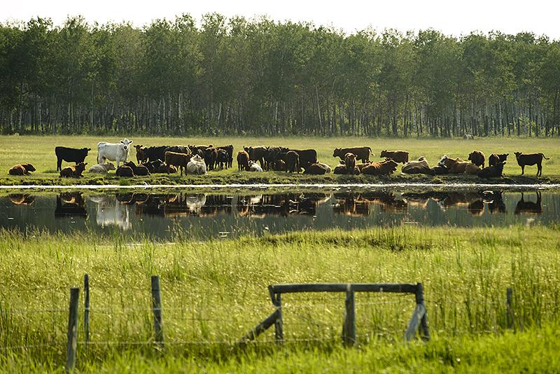Canada, Manitoba. June/30/2013.